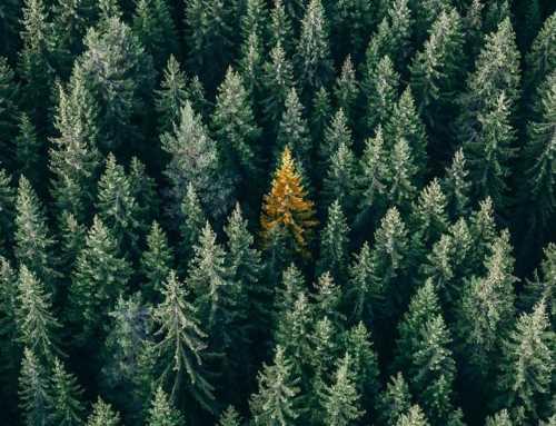 Un arbre per a cada record: l'homenatge als difunts de 2020