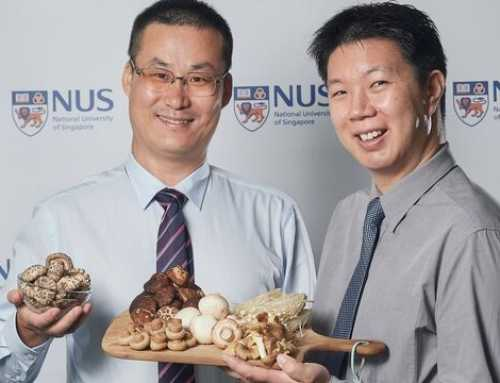 Xampinyons, el menjar d'or: cuiden el cervell i eviten la demència senil